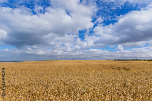 Photo Stands Night blue Wheat field and blue sky