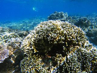 Exotic island shore shallow water. Tropical seashore landscape underwater photo.