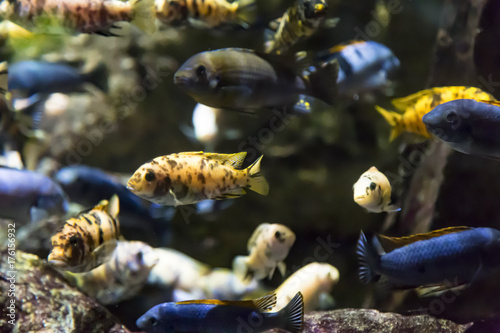 Various colorful fish swimming underwater