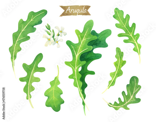 Photo Fresh Arugula leaves and flowers isolated on white watercolor illustration