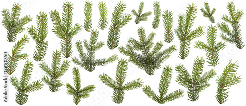set of fresh green pine branches isolated on white background Fototapeta