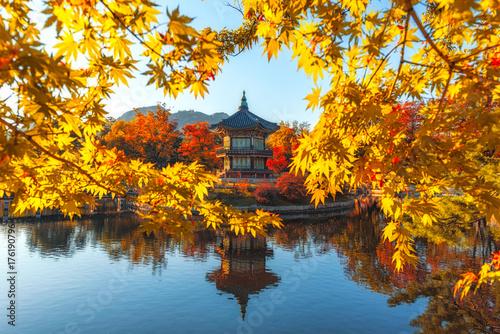Zdjęcie XXL Gyeongbokgung Palace Z liśćmi klonu w kolorach jesieni, Seul, Korea Południowa
