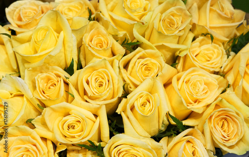Flower Background Of Yellow Rose Buy This Stock Photo And Explore