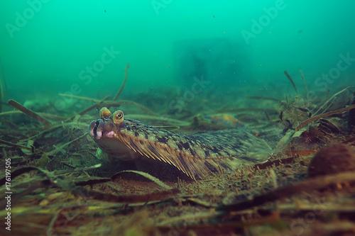 Spoed Foto op Canvas Groene koraal underwater landscape