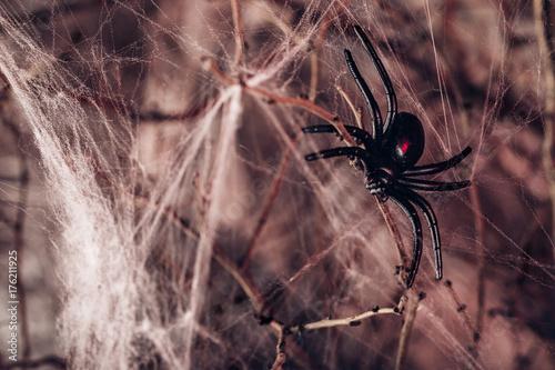 tlo-na-halloween-pajak-i-pajeczyna