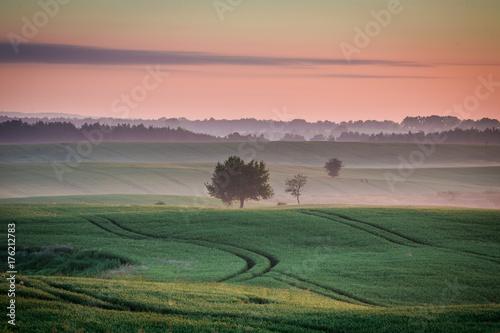 Foto auf Gartenposter Landschappen Wonderful dawn at foggy field in summer