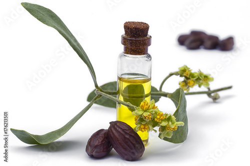 Vászonkép Jojoba (Simmondsia chinensis) oil, leaves, flower and seeds on White background