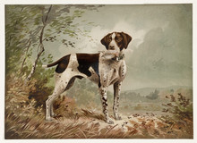 Old Illustration Depicting An English Pointer, Breed Of Gun Dog. By Bencke, Publ. 1879