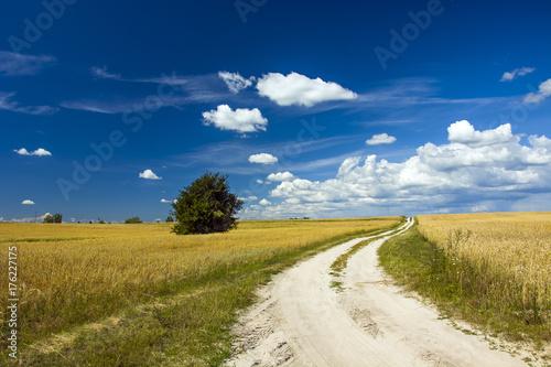 Fototapeta Droga między polami zbóż