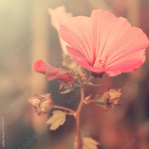 Deurstickers Poppy Vintage flower clover on the background of sunrise