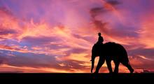 Mahout Ride Elephant.