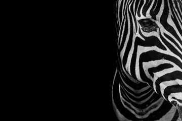 Fototapeta Zebry portrait of zebra. Black and white version.