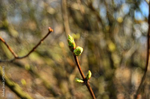 Obraz na plátně Kwiatki i mlode pączki na gałązkach wiosennych drzew.
