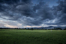 Dark Stormy Clouds Over Rice F...
