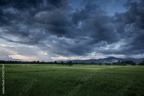 Fototapeta Dark stormy clouds over rice field.