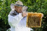 Fototapeta Zwierzęta - portret pszczelarza w pasiece