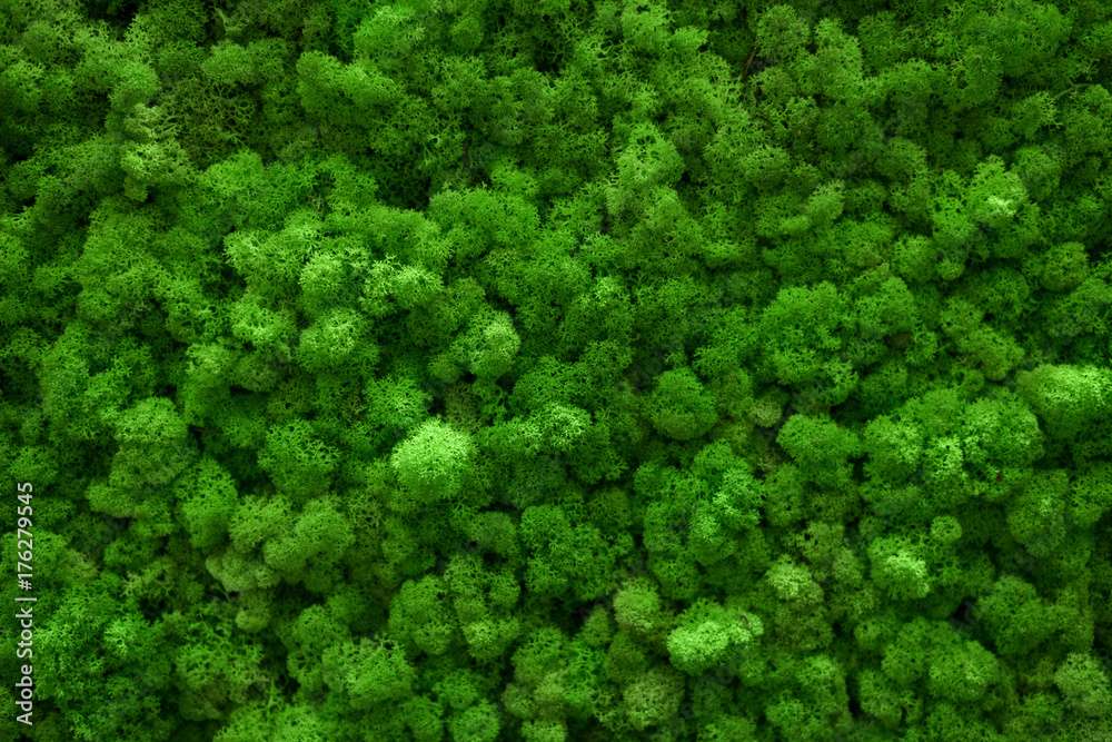 Fototapety, obrazy: Green moss covered the ground. Nature background concept. Flat lay, top view.