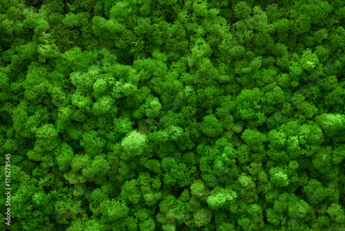 Fototapeta Green moss covered the ground. Nature background concept. Flat lay, top view. obraz