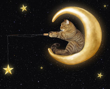 The Cat Sits On The Moon And Catches The Stars.