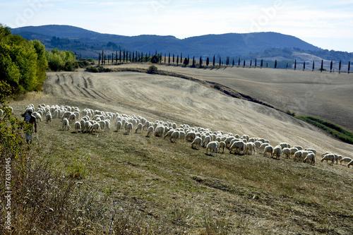 Deurstickers Toscane Pastorizia in Toscana