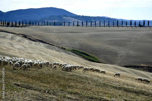Deurstickers Toscane Paesaggio toscano - colline di Siena