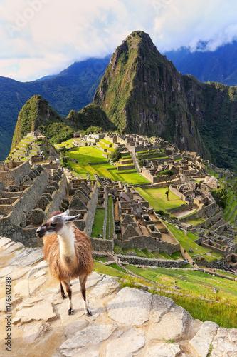 Llama standing at Machu Picchu overlook in Peru Wallpaper Mural