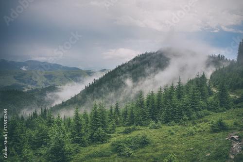 Foto op Canvas Pistache beautiful forest landscape in the mountains