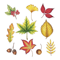 Hand drawn Autumn Leaves
