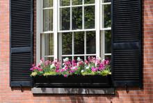 Window Box Detail