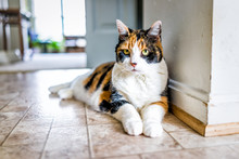 Closeup Portrait Of Old Calico Cat Lying Down By Kitchen On Tiled Floor In Home, House, Apartment