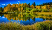 Reflective Lake Aspens