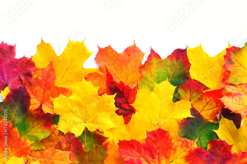 Photo Autumn Leaves Border