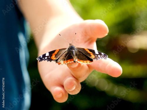 Fotografía  Schmetterling auf Kinderhand