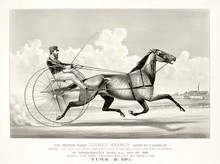 Old Illustration Of A Trotting...