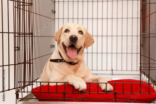 Obraz na plátně  Dog in cage