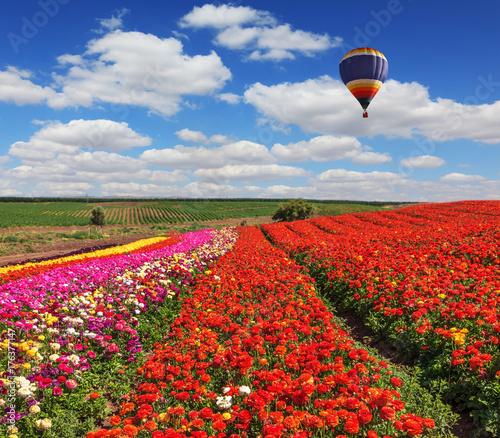 Plakat Duże malownicze balony