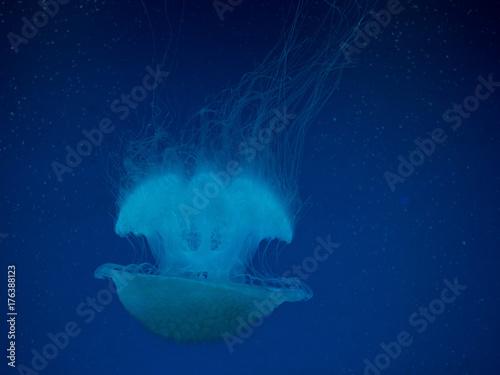 Plakat Meduza