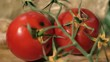 Rotten Tomatoes on Wooden Background