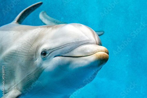 фотографія  dolphin close up portrait detail while looking at you