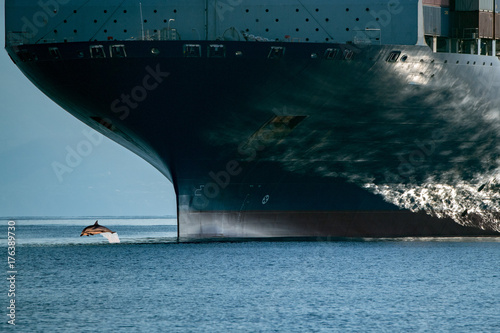 Foto dolphin jumping over ship prow
