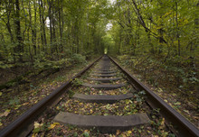 Rail Ways Rows In Tunnel Of Trees