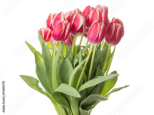 piekny-bukiet-czerwonych-tulipanow-z-zielonymi-liscmi-na-bialym-tle