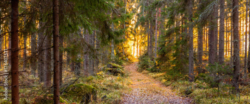 Foto op Canvas Herfst Autumn in Finland, lake and forest, sunset, nature photography. Travel.