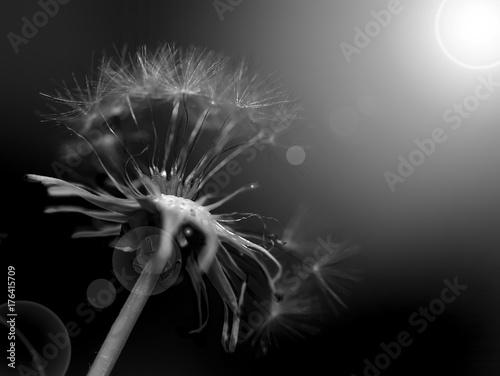 maly-dmuchawiec-na-czarnym-tle-oswietlony-promieniami-w-miekkim-ujeciu-efekt-bokeh