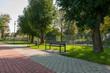 Ławka w parku, Jędrzejów