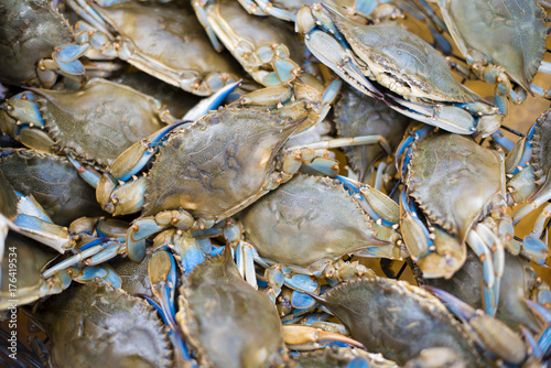 maryland blue crabs Canvas Print