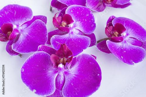 Zdjęcie XXL Feng Shui, orchidee w misce z wodą