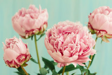Close Up Of Pink Peony Flower Bouquet
