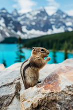 Beautiful Wild Chipmunk Sits O...