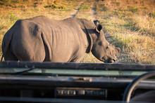Single White Rhino Blocking A ...